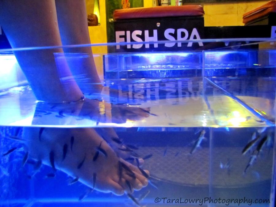 fishspa2