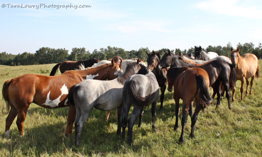 Me with some of my fellow horses. I'm the human one in the middle,